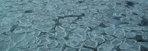 Ice core impurities - sea ice and burning trees